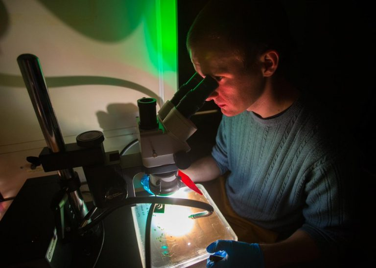Searching for transgenic roots